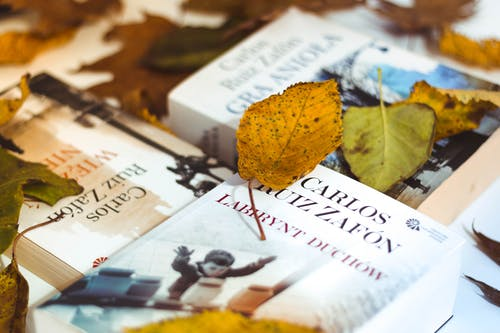 Assorted-title Books Covered by Dry Leaves