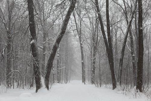 Photos gratuites de arbres, branches d'arbre, brouillard, brume