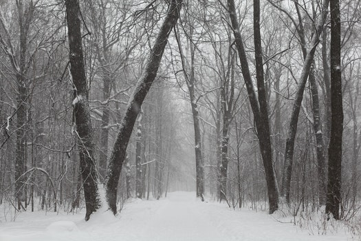 Gray Scale Photo of Trees on Snow