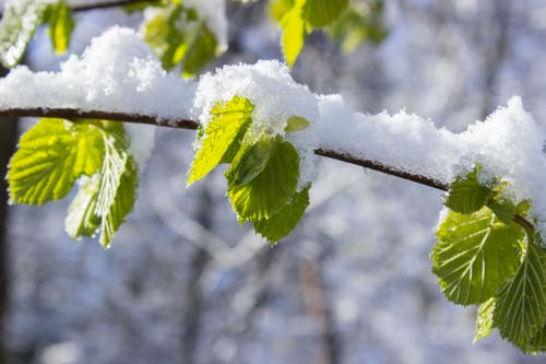Gratis stockfoto met close-up, depth of field, met sneeuw bedekt, natuur