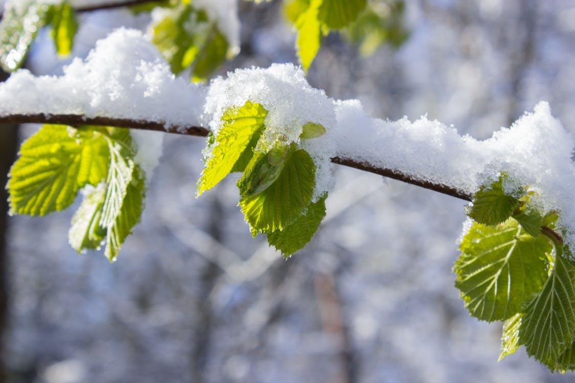 가지, 겨울, 눈