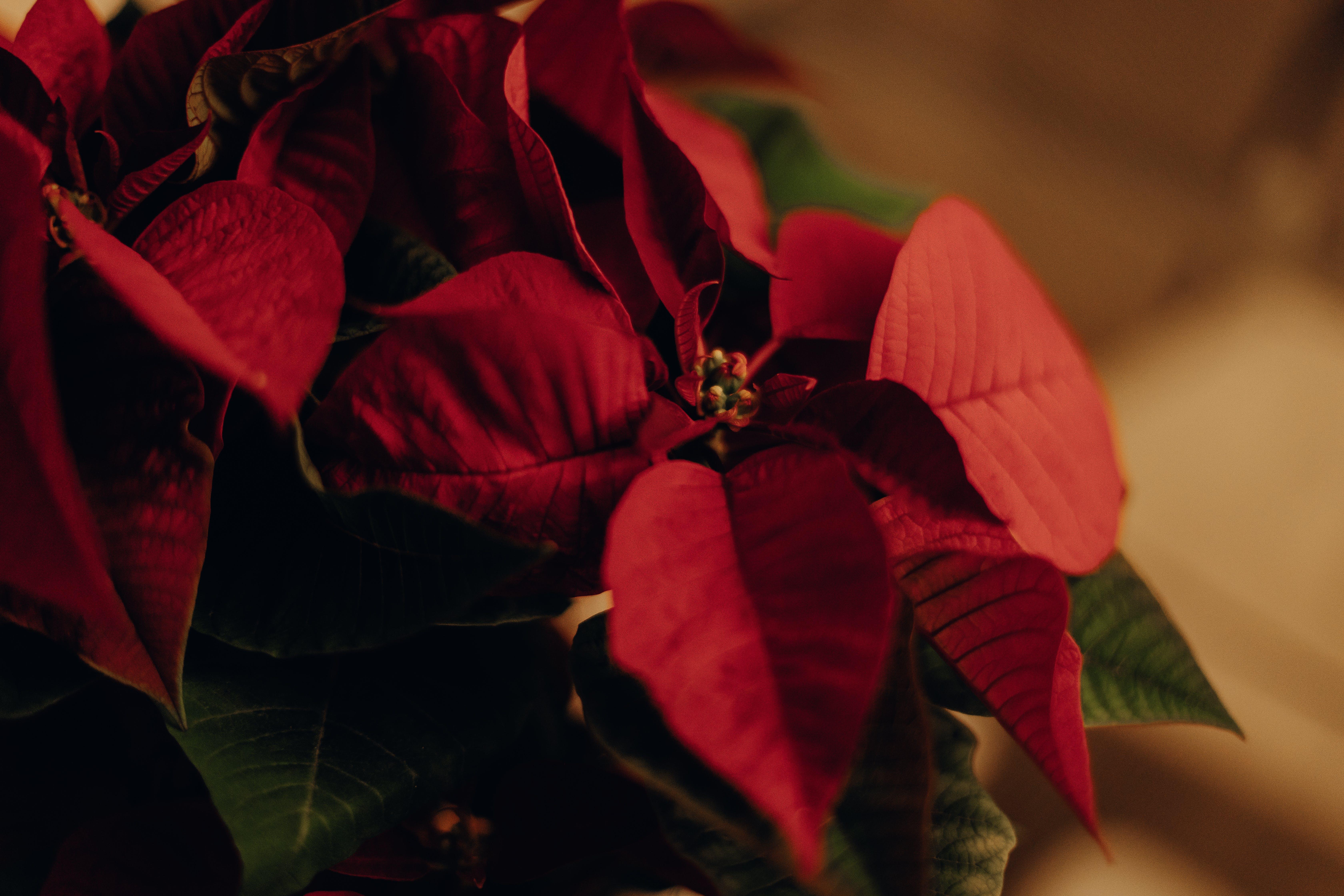 咲く, 緑, 背景をぼかした写真, 花の無料の写真素材