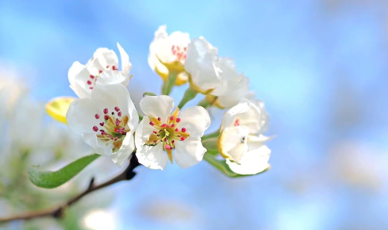 꽃, 꽃가루, 꽃이 피는