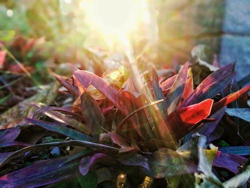 Základová fotografie zdarma na téma barva přírody, dokonalost, počasí, příroda