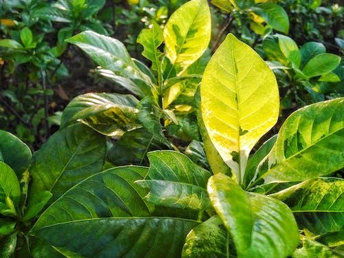 Základová fotografie zdarma na téma krása v přírodě, zelená, zelené listy