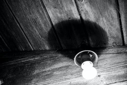 คลังภาพถ่ายฟรี ของ lightlub, สว่าง