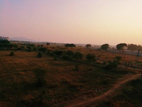 Foto d'estoc gratuïta de ambient, capvespre, hora daurada, natura