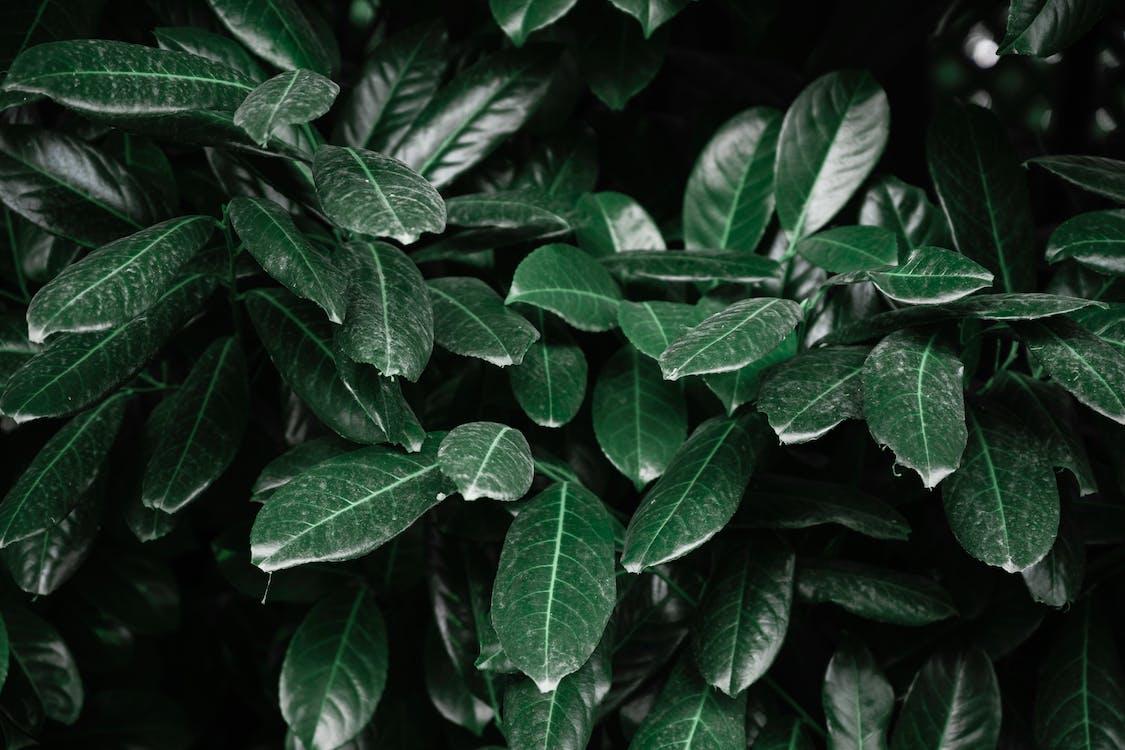 ciemnozielony, fotografia przyrodnicza, roślina