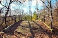 bridge, trees, path