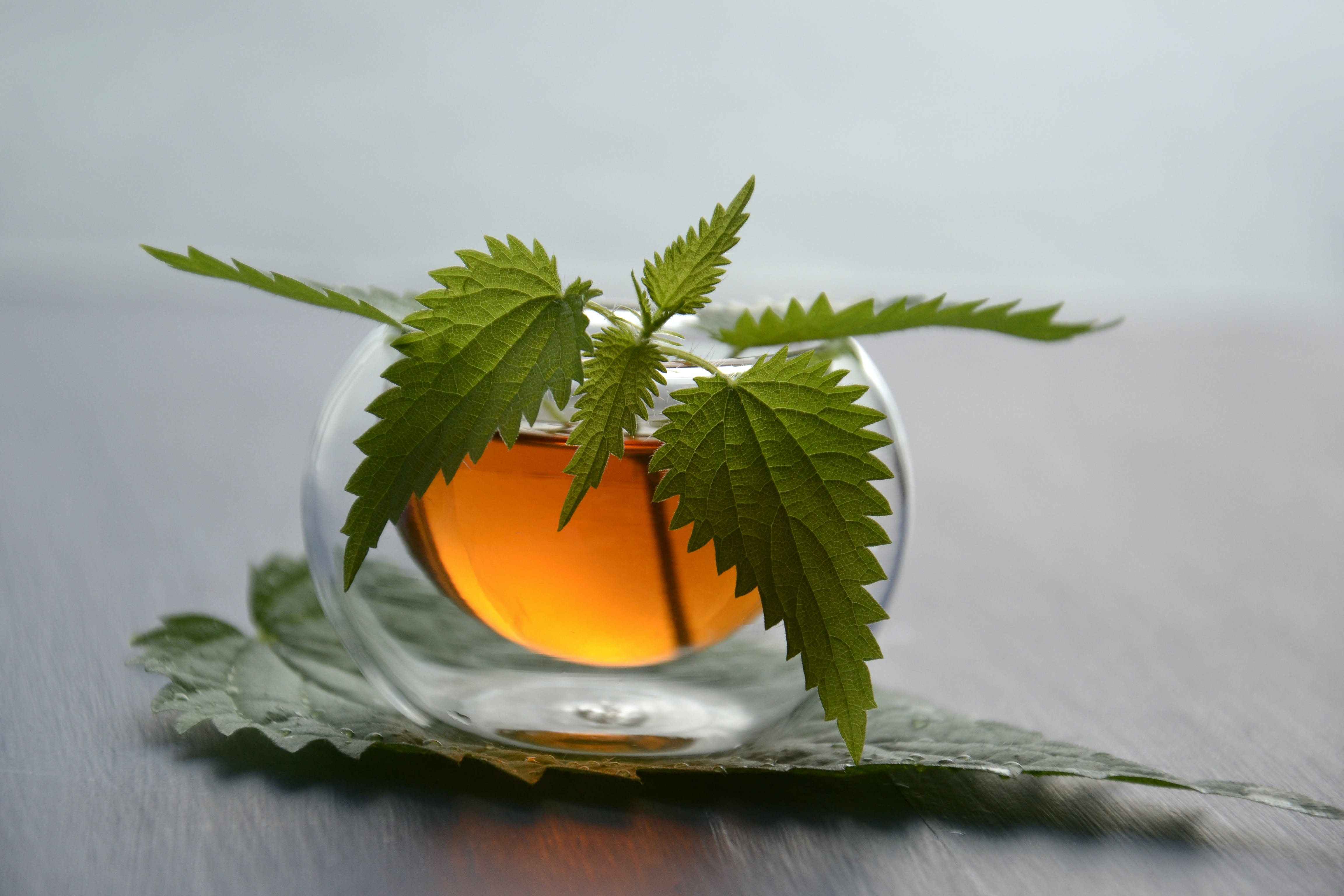 Green Leaves in Clear Glass Cup