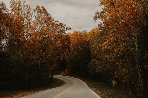Gratis lagerfoto af dagslys, efterårsfarver, natur, naturfotografering