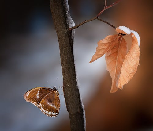 Close Up Photo of Brown and White Butterfly on Wood Branch
