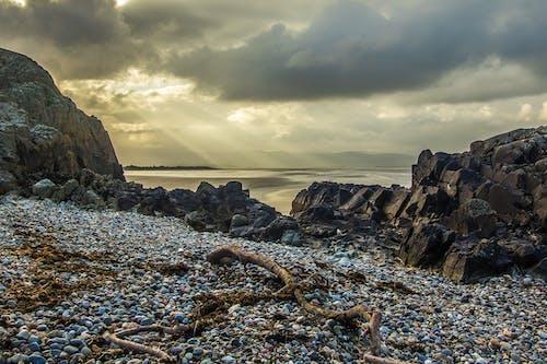 ağaç dalı, deniz, deniz kıyısı, deniz manzarası içeren Ücretsiz stok fotoğraf