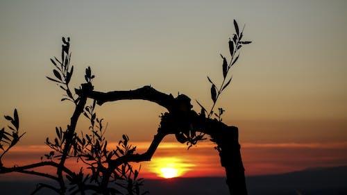 Foto d'estoc gratuïta de alba, branques, capvespre, cel
