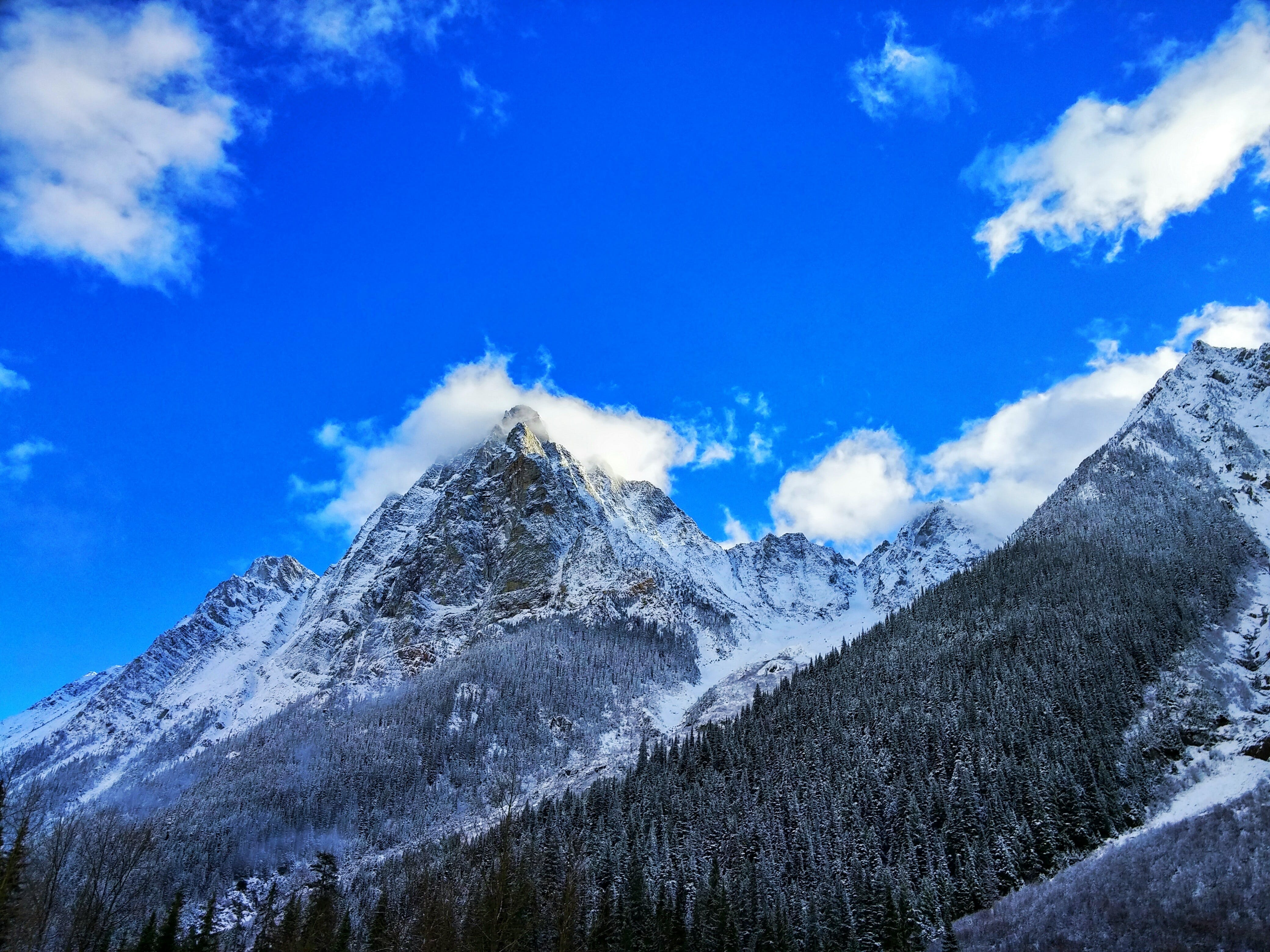 Gray Rocky Mountain Beside Pine Tree Under Blue Cloudy Sky during Day Time