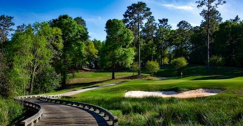 Kostenloses Stock Foto zu bäume, golfplatz, gras, landschaft