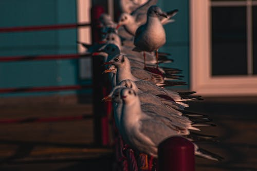 colibri, 側面圖, 動物, 專注 的 免费素材照片