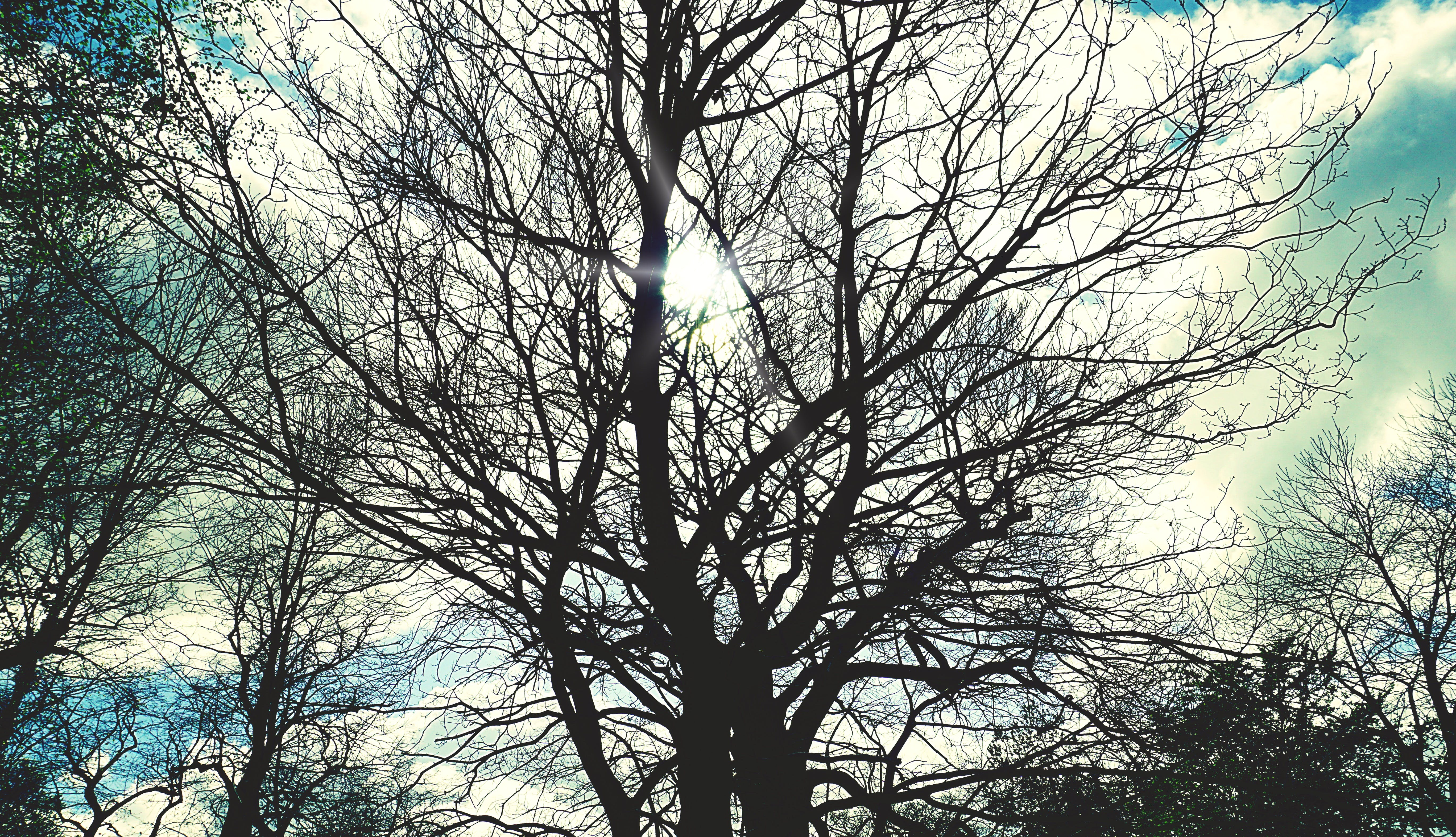Free stock photo of autumn, bare tree, nature, silhouette