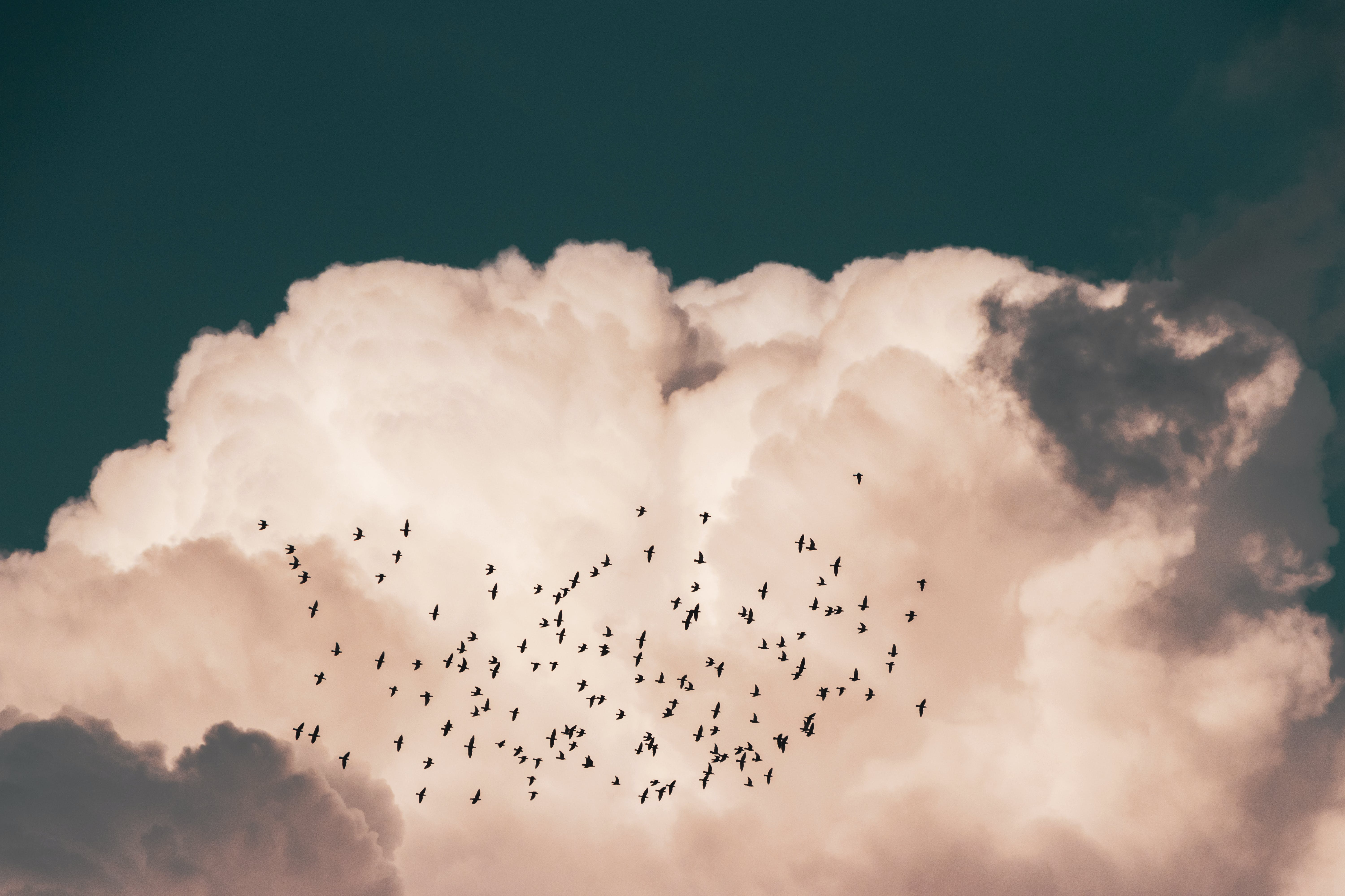 Flock Of Birds Flying Near White Clouds