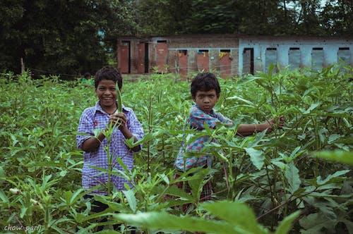 Kostnadsfri bild av Asien, barndom, grön, indien