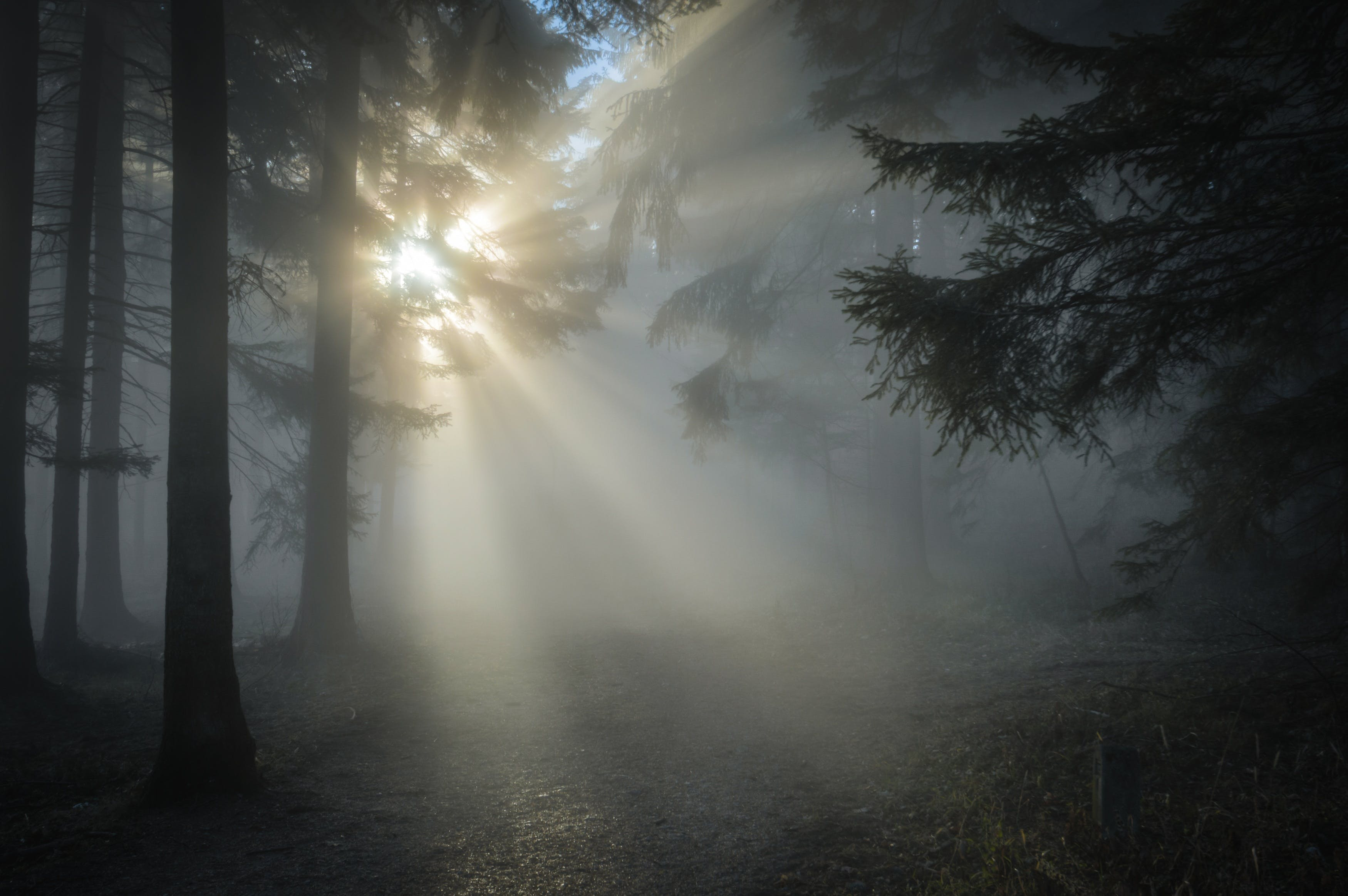 Sun Rays Through the Tree Leaves and Mist
