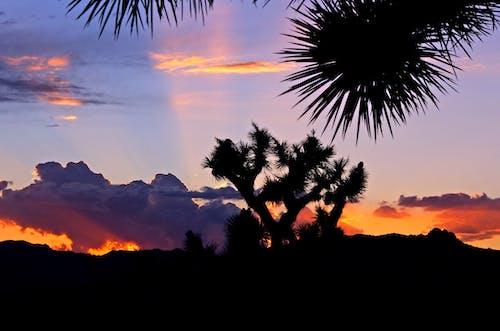 Základová fotografie zdarma na téma krajina, malebný, mraky, rostliny