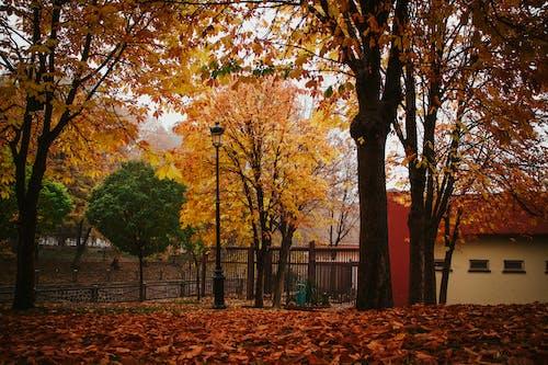 Ilmainen kuvapankkikuva tunnisteilla aita, este, kirkas, kuivat lehdet