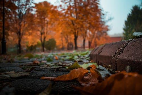 Ilmainen kuvapankkikuva tunnisteilla keskittyminen, kirkas, lähikuva, luonto