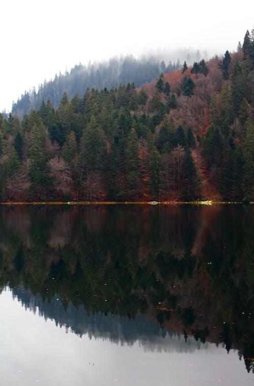Kostenloses Stock Foto zu bäume, berge, gewässer, himmel
