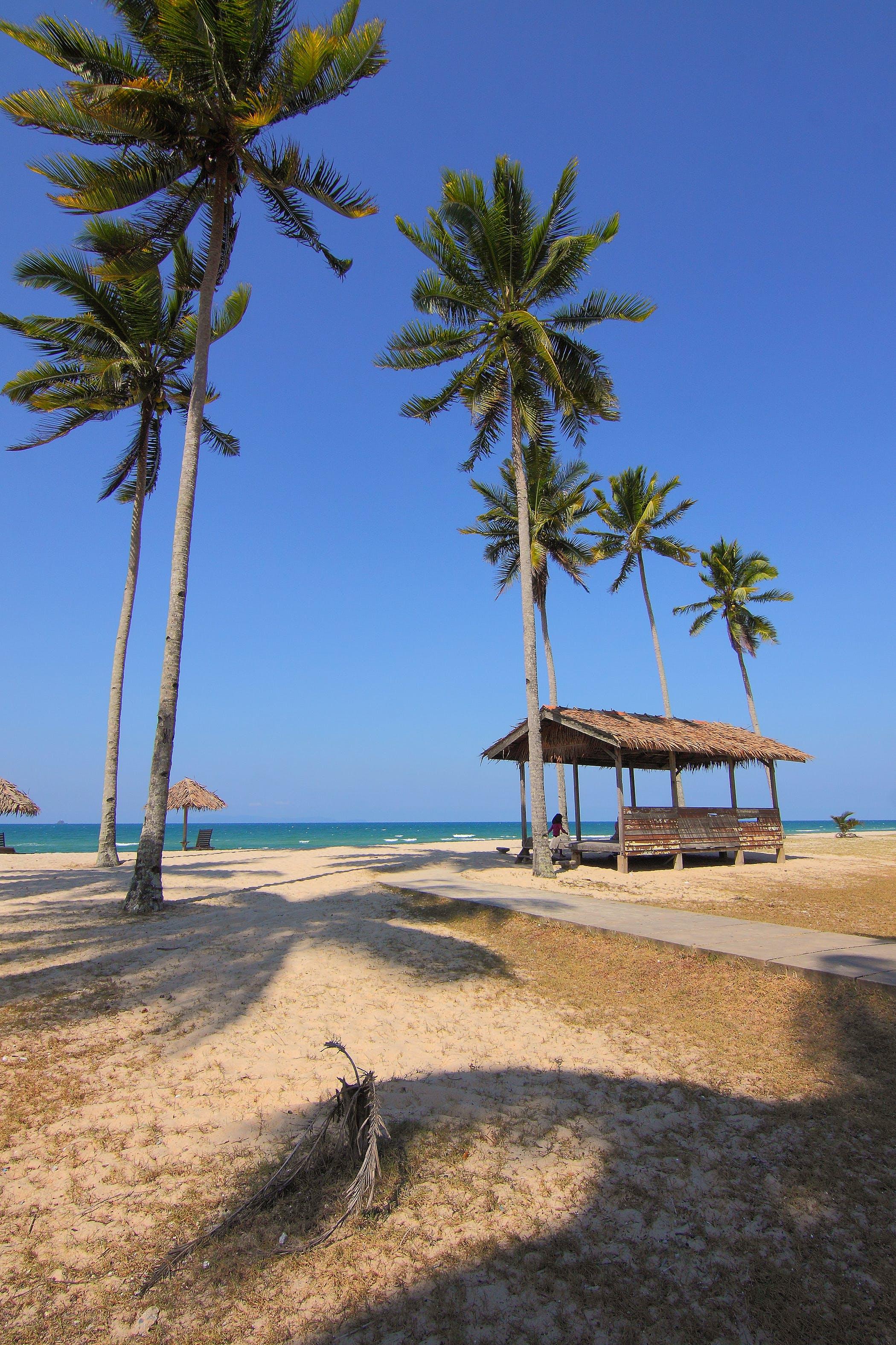 Coconut Trees Near Seashore