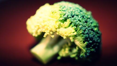 Free stock photo of broccoli, macro photography