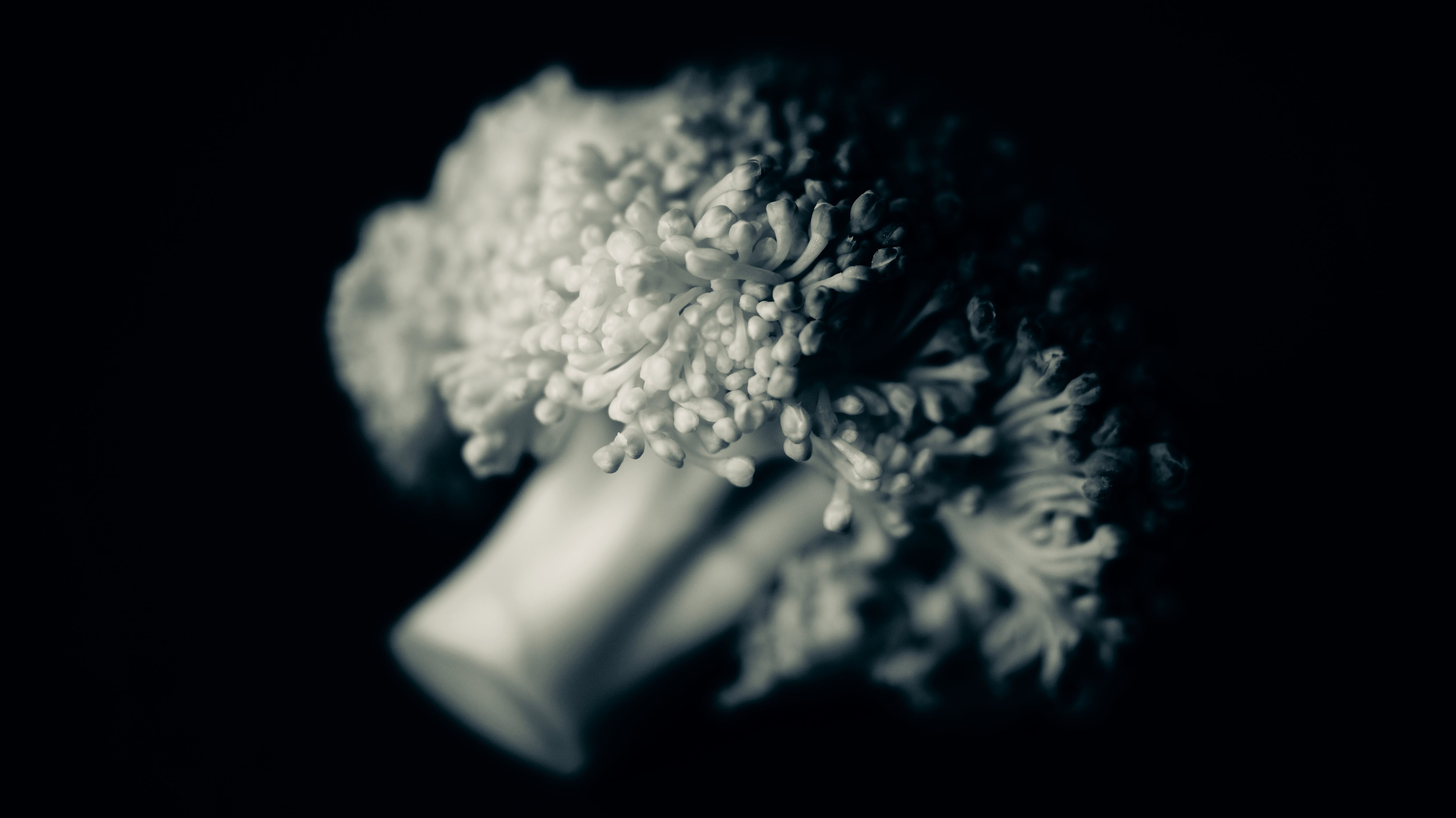 Free stock photo of black and white, broccoli, close-up view, macro photography
