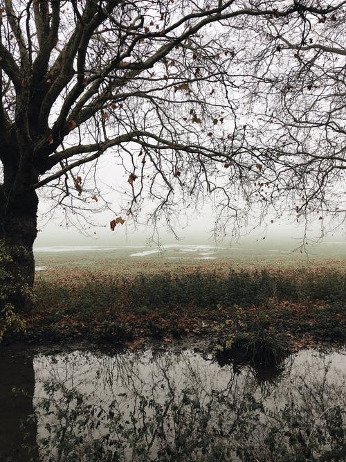 Leafless branches of tree growing near lake and reflecting on water surface with mist on background on autumn day