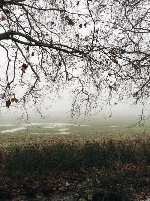 Thin leafless branches of tree in park with morning foggy sky on background on autumn day