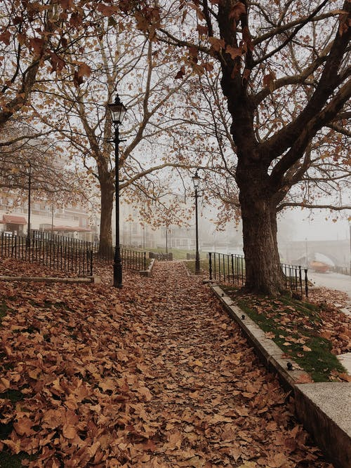 Dried Leaves Under a Tree on Park With Fogs Landscape Photography