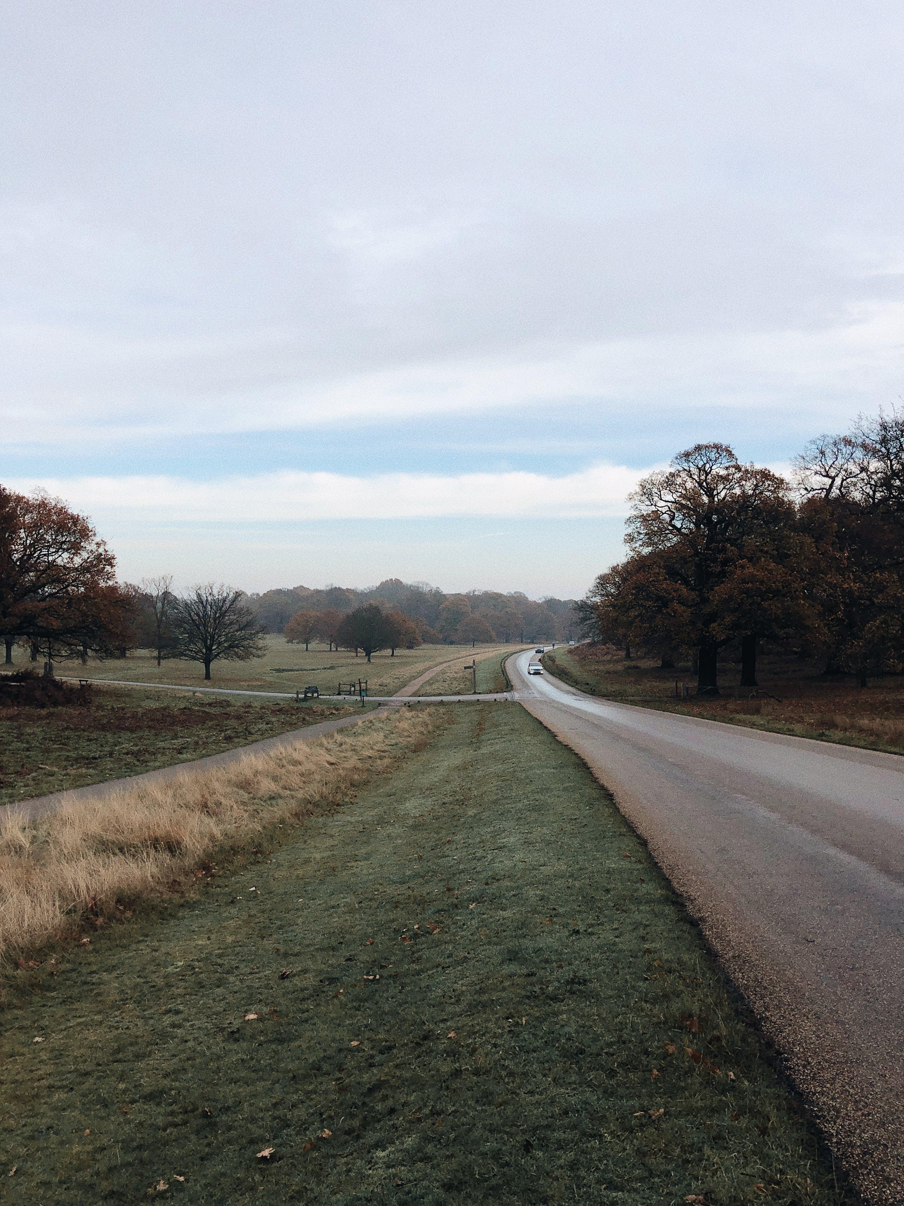 Road Near Green Grass Field