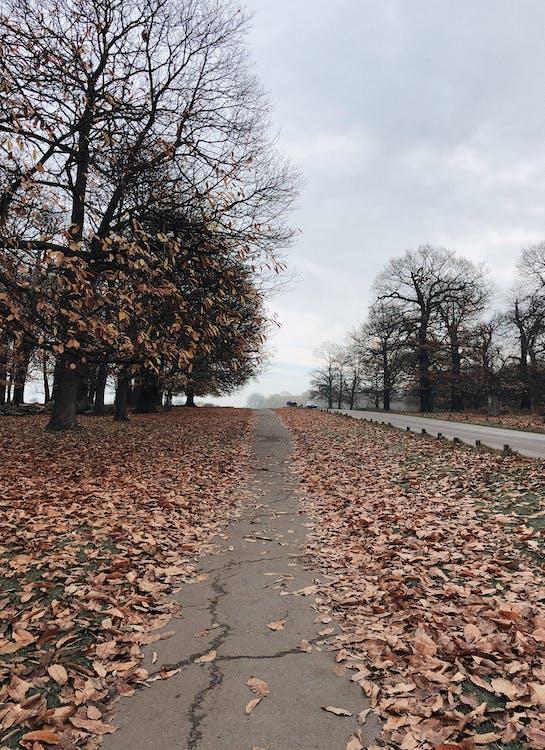 asfalteret sti, dagslys, landskab