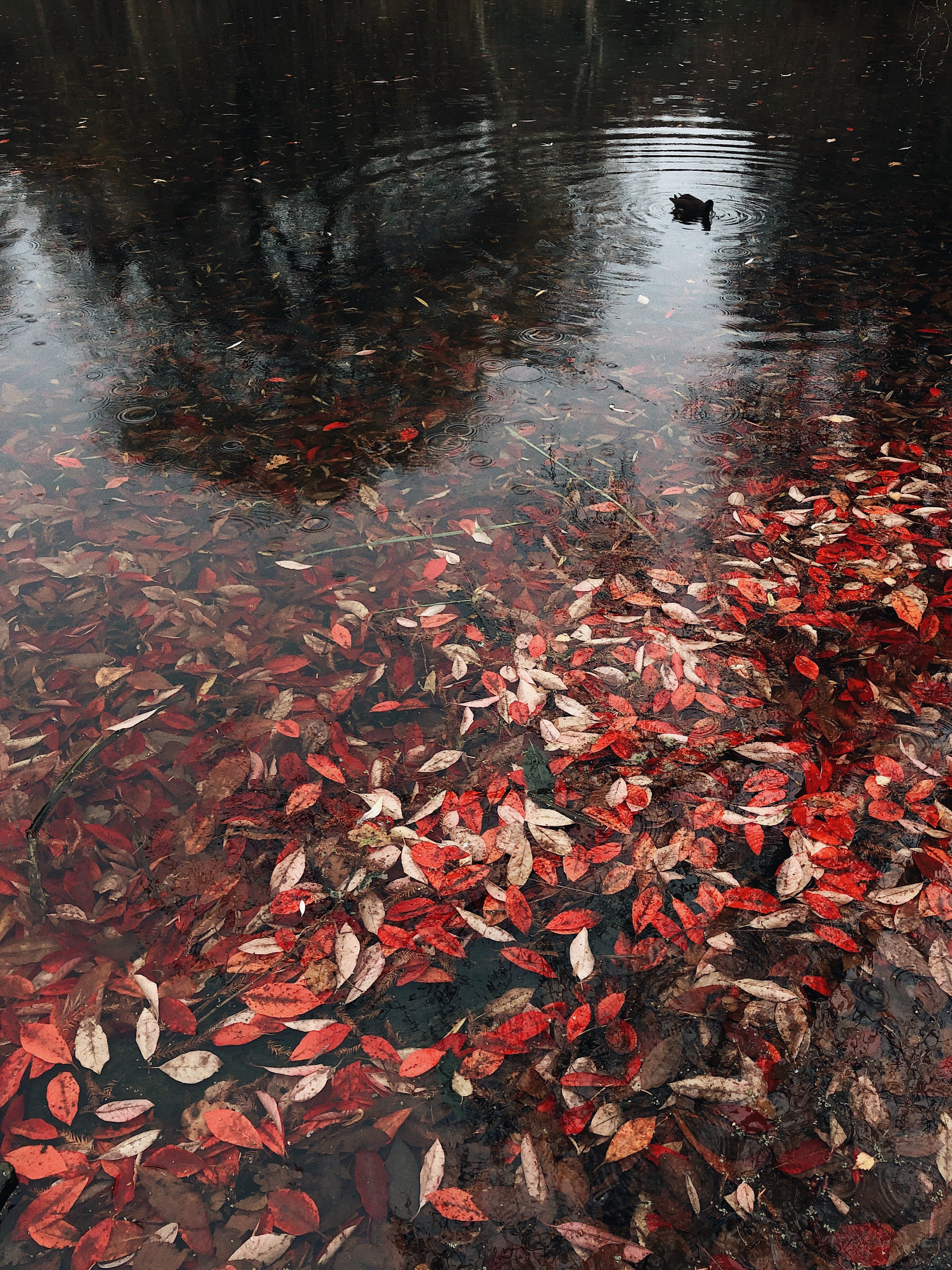 Body of Water With Leaves