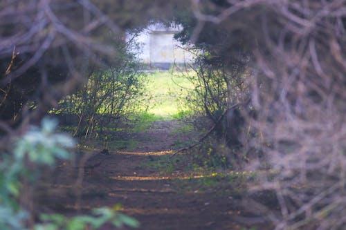 ağaçlar, tünel içeren Ücretsiz stok fotoğraf