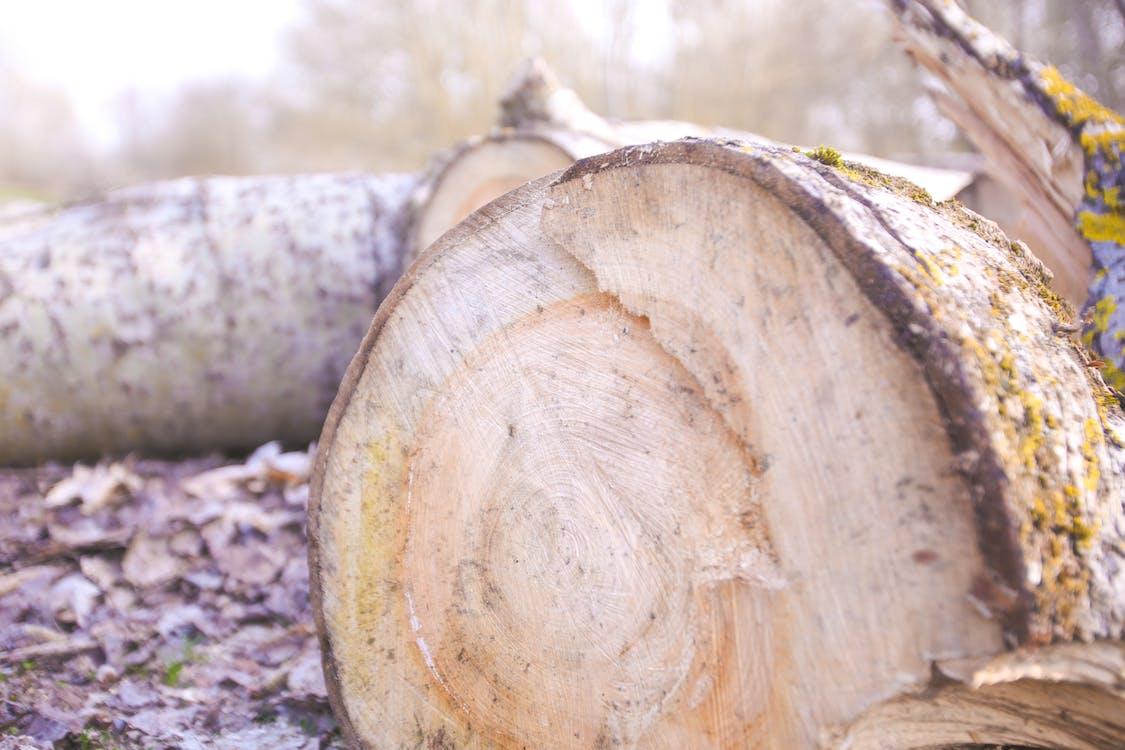 drewno, drzewo, las