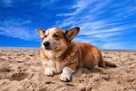 beach, sand, animal