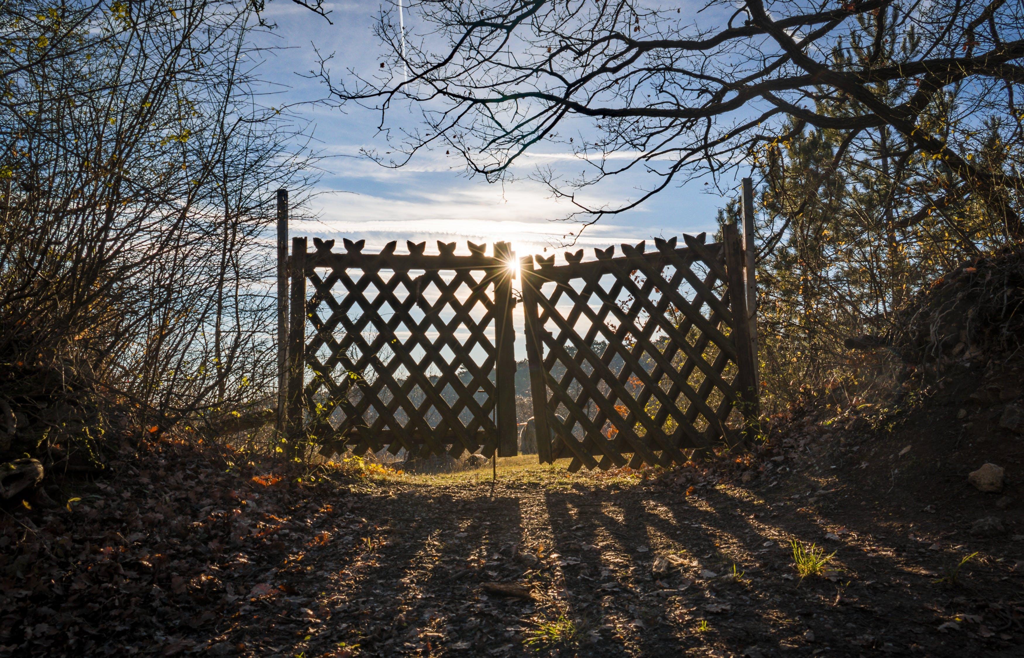 ゲート, ドライ, 乾燥した葉, 光の無料の写真素材