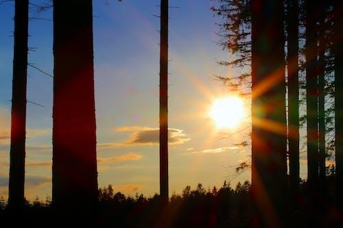 夜明け, 太陽, 日の出, 日光、太陽光の無料の写真素材