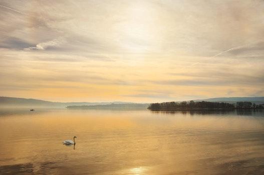 Free stock photo of landscape, sky, sunset, bird