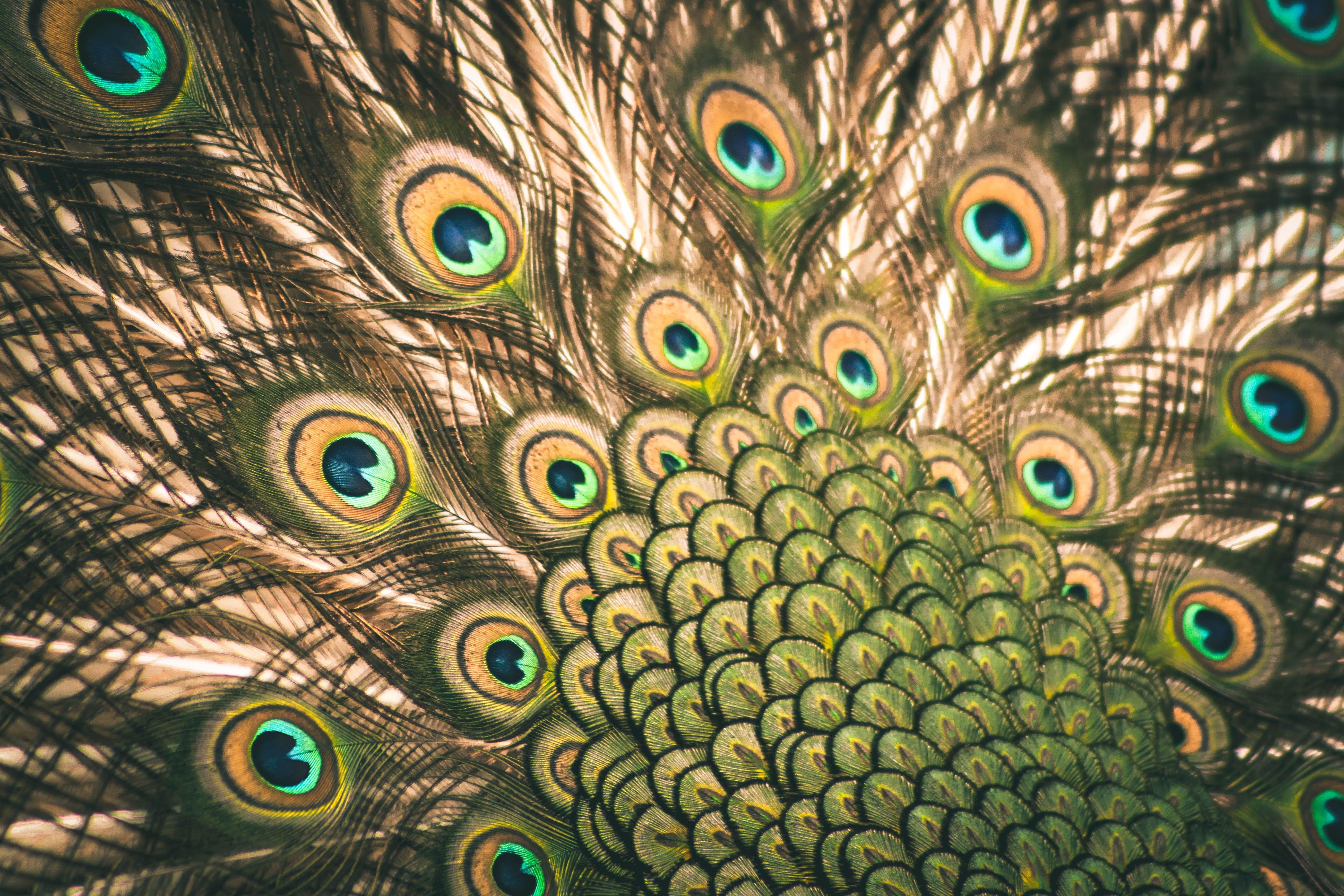Free stock photo of animal, bird, blue, feather