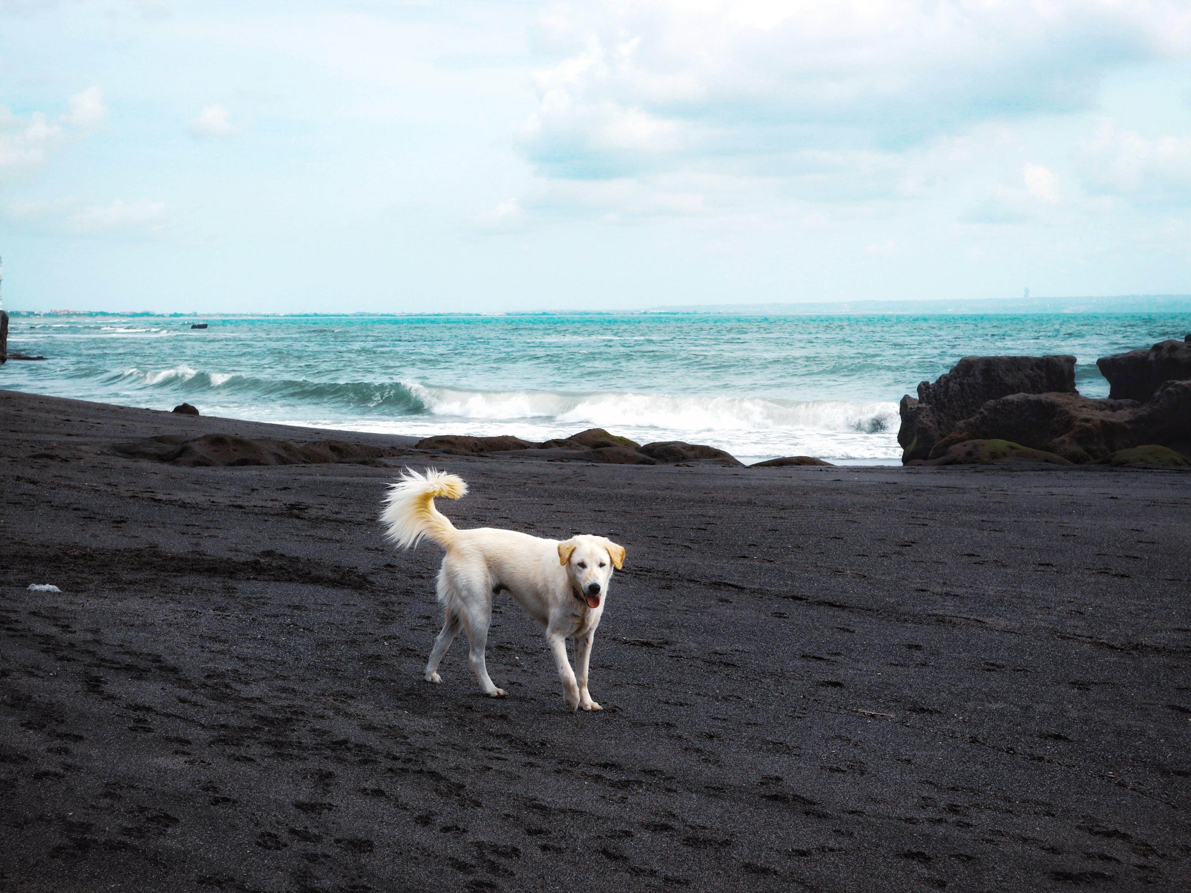 Free stock photo of animal, animal lover, bali, beach