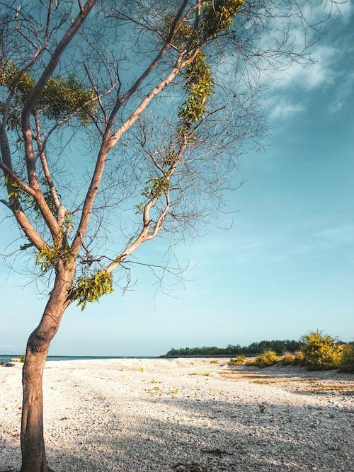 Gratis stockfoto met Bali, blauw, boom, groen