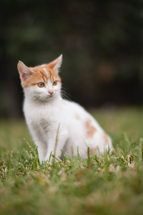 Close-Up Photo of Cat Sitting On Grass