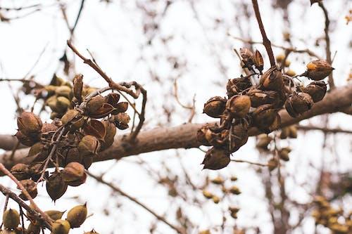 Бесплатное стоковое фото с canon, nikon, ветви, зима
