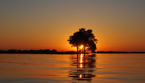 Calm Water Surface Overlooking Sun Setting on the Horizon Blocked by the Silhouette of Tree
